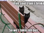 funny-cat-pictures-lolcats-teh-soul-train-s-broke