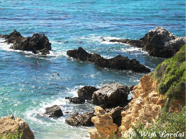 Corona Del Mar, CA - Beach Tide Pools with Seagull