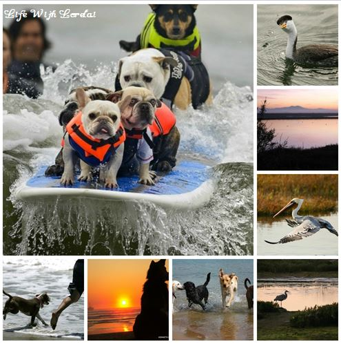 Huntington Beach - Dog Beach - Bolsa Chica Wetlands Collage
