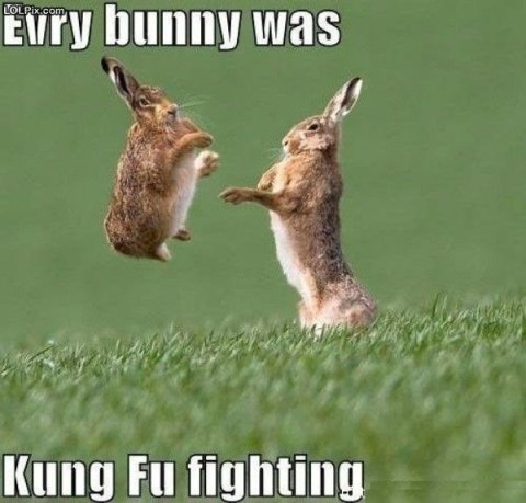 Kung Fu Fighting Bunnies - mileanhour-com
