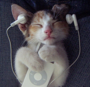 Kitty Enjoys iPod - Life With Lorelai